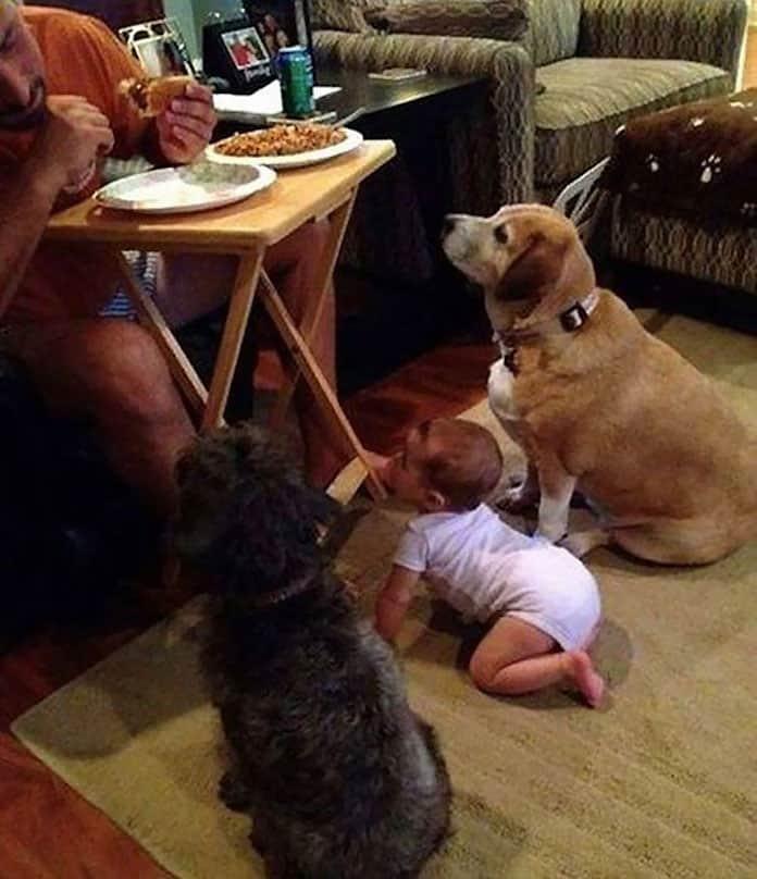 Ми-ми-ми. Собаки выпрашивают еду. Ты не сможешь отказать